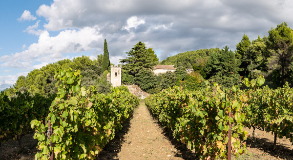 Weinberge-Domaine-des-Bosquets-Pano2